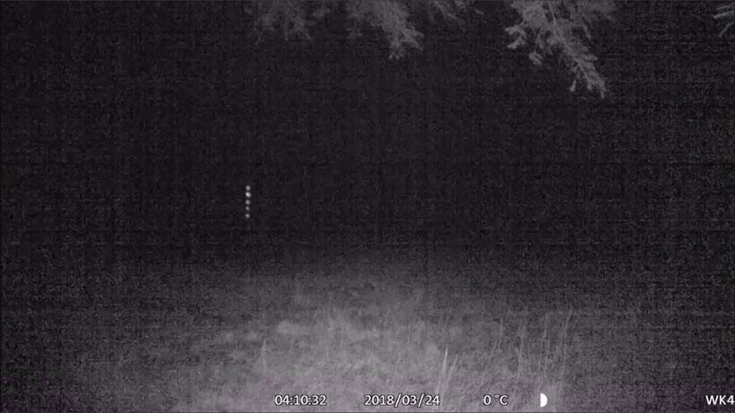 Strange lights in outdoor wildlife camera video from Denmark